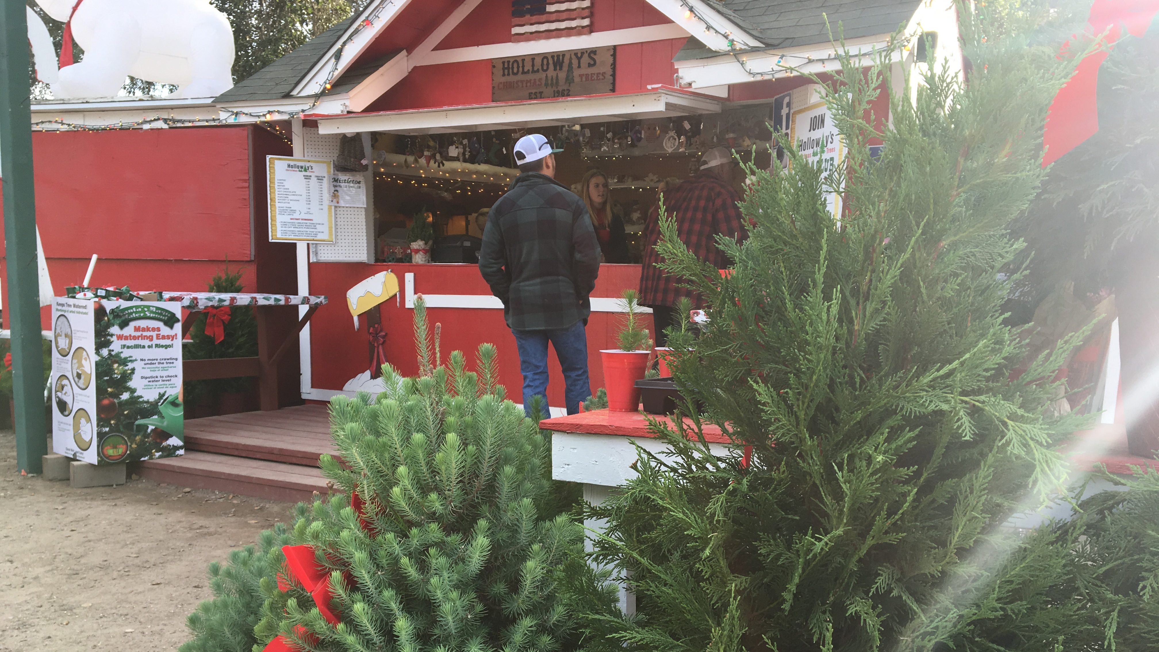 Christmas Tree Farm Pictures.Popular Nipomo Christmas Tree Farm Opens For The Holidays
