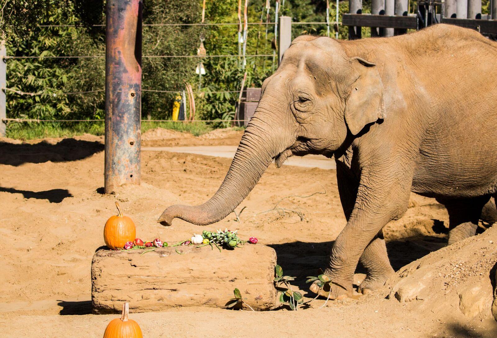 Santa Barbara Zoo Elephant