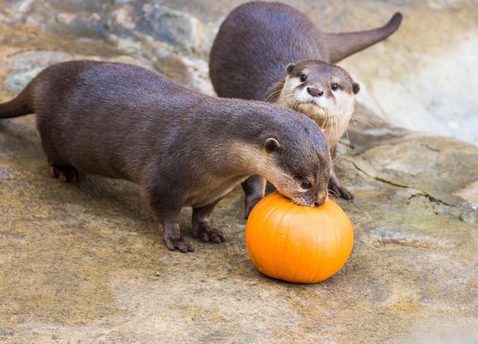 Santa Barbara Zoo Otters