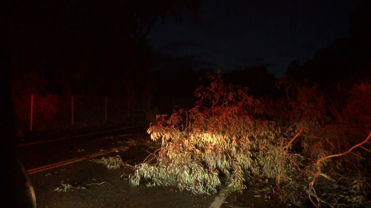 A tree blocks part of Palisades Dr. in Shell Beach Thursday morning. KSBY photo