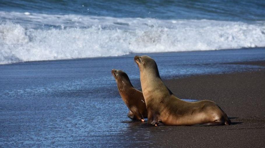 Wazowski and Spruce sea lions