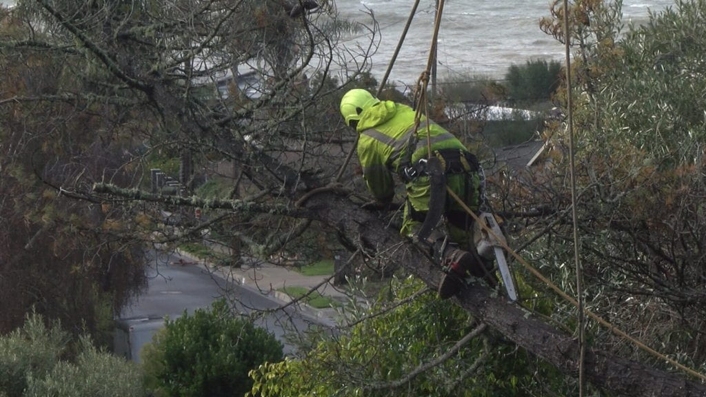 Workers trimming a fallen tree in Shell Beach Monday morning. (KSBY photo)