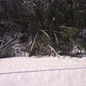 Passengers could see some of the downed trees from the train cabin. Courtesy Jordyn Hooper
