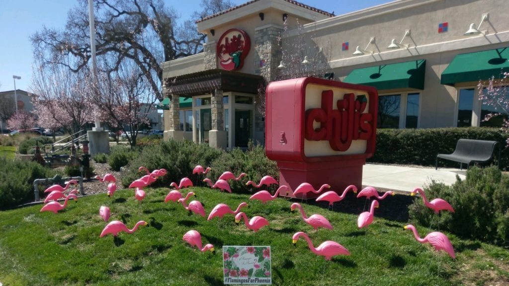 Flamingos for Phoenix fundraiser