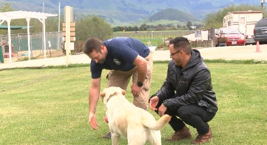 New Life K9s Absolutely Saved My Life Service Dog Trained
