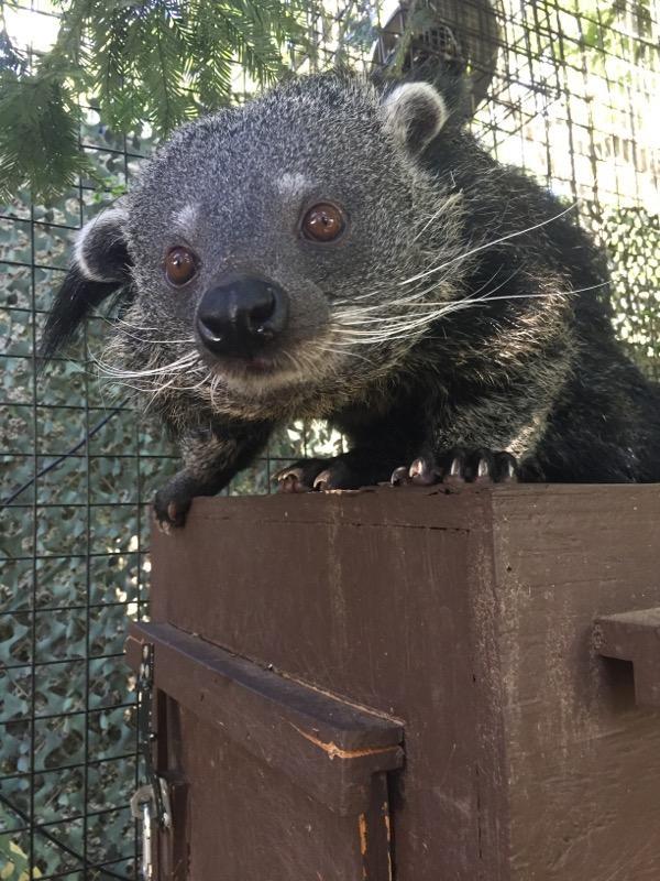 New bearcat